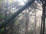 133toward-the-summit-of-mt-greylock-ma