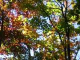 201-fall-colors