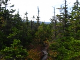 206-typical-maine-trail