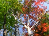 211-more-fall-colors