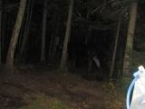 215-moose-visiting-at-night