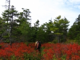 248-gq-in-some-very-red-vegetation