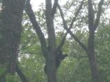 116-black-bear-in-nj