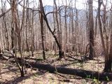 008recently-burned-licklog-gap-nc