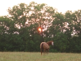 101-horse-at-sunset