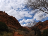 The Red Reef Trail in Red Cliffs National Recreation Area, UT.
