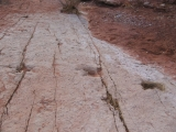 It is incredible to see dinosaur tracks on a hike (or anywhere for that matter). This is on the Metate Trail.