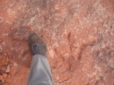 Another dinosaur track! This in on the Silver Reef Trail.
