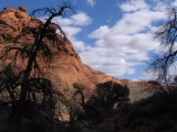 Quail Creek in Water Canyon. Red Cliffs National Conservation Area, UT.