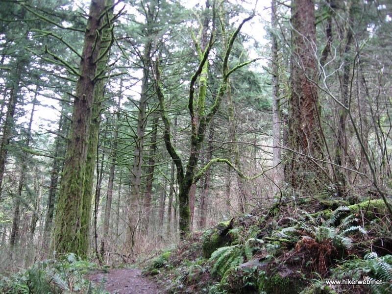 (4) Lush trail