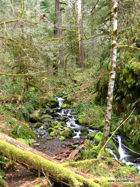 Streams feed Eagle Creek along the entire hike, keeping the forest alive with gurgling pools and cascades.