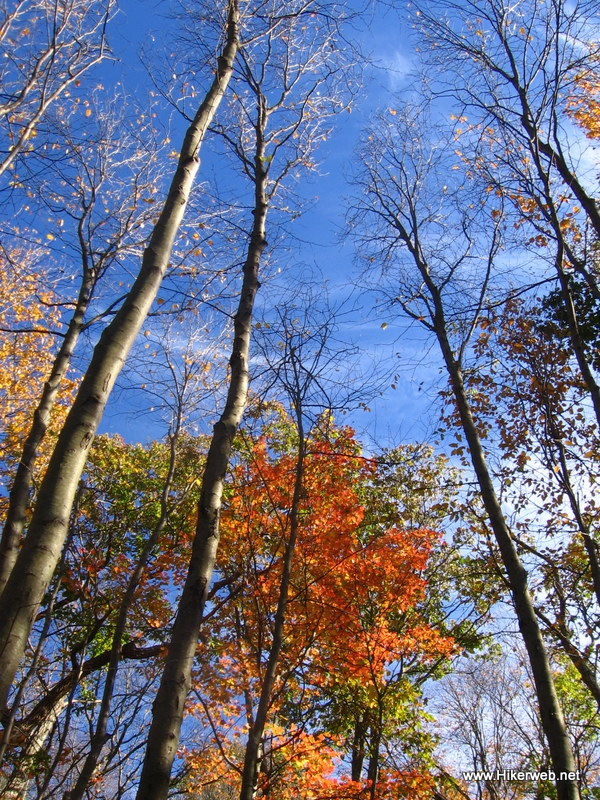 Trees with fall color against a blue sky.